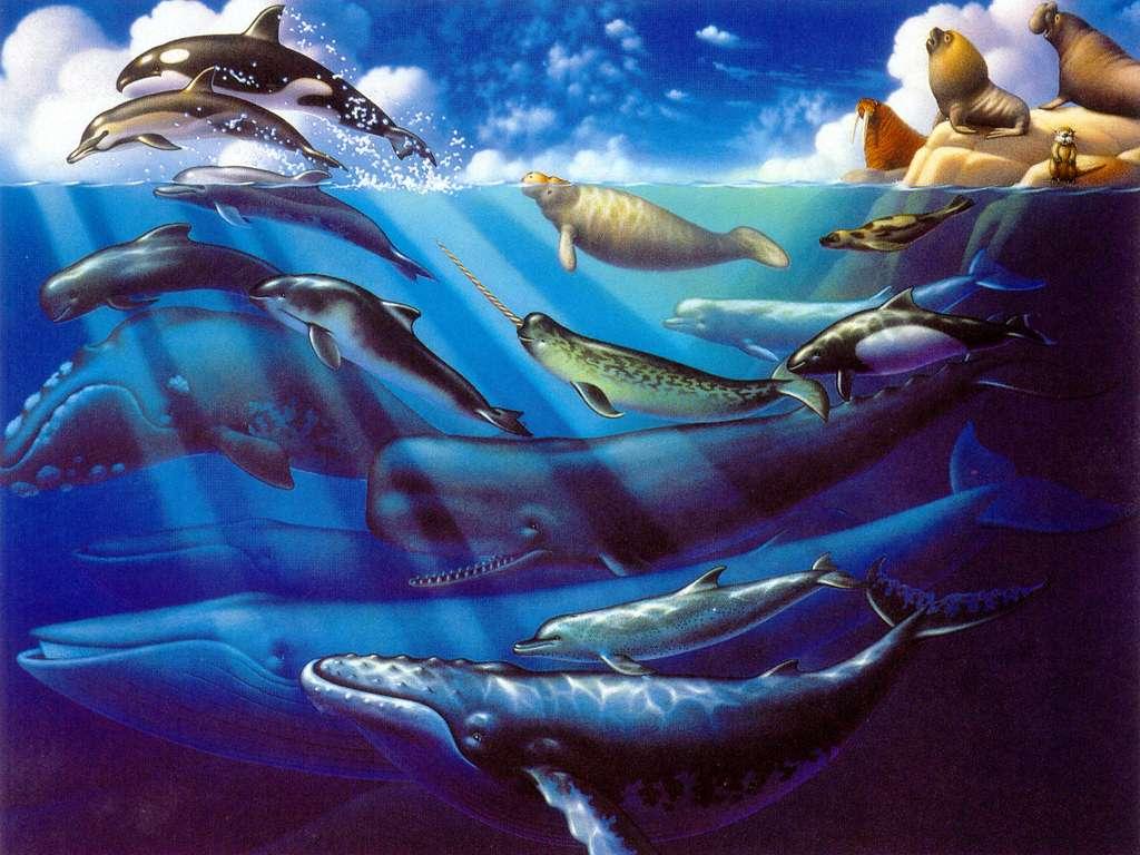 Подводный мир моря природа